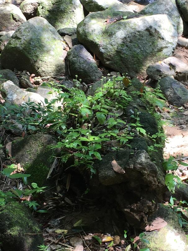 バンペー滝15.JPG